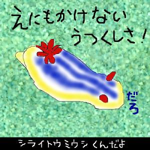 シライトウミウシ.JPG